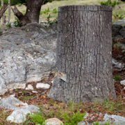 NATURE BLINDS Big Oak Wildlife Feeder - field discharge