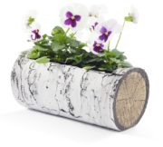 "SURREAL 11"" Horizontal Birch Planter 3"