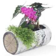 "SURREAL 11"" Horizontal Birch Planter 2"