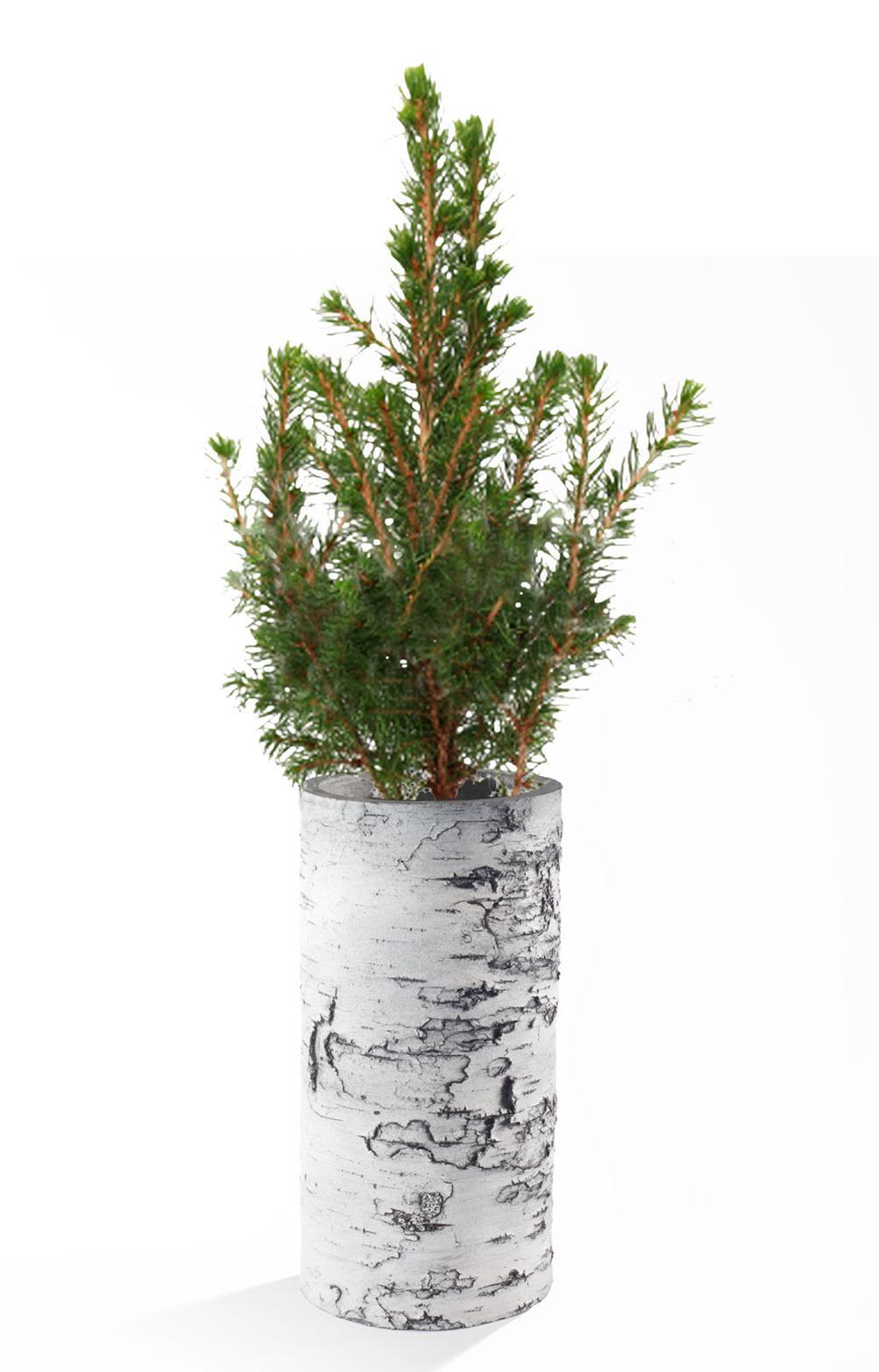 "SURREAL 12"" Birch Vase - Winter"