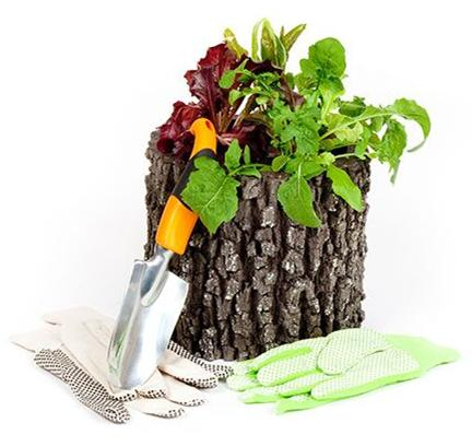 "SURREAL 9"" Vertical Oak Planter"