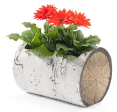 "SURREAL 13"" Horizontal Birch Planter"
