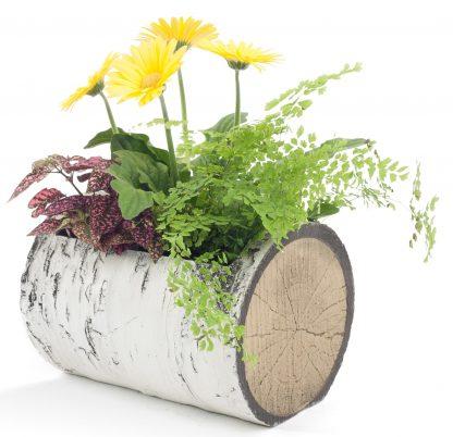 "SURREAL 13"" Horizontal Birch Planter 2"