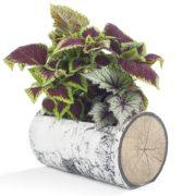 "SURREAL 16.5"" Horizontal Birch Planter 2"